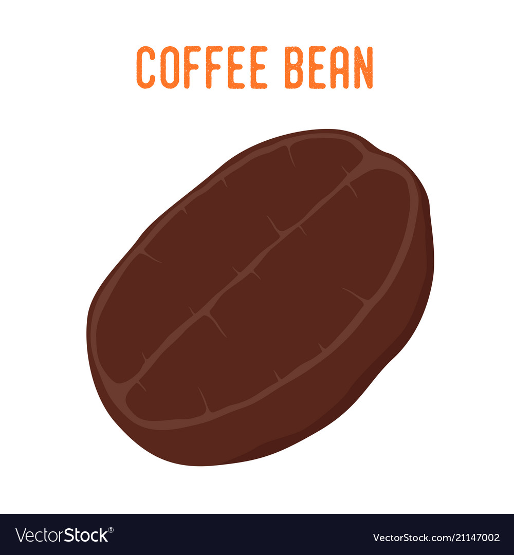 coffee bean robusta roasted seed royalty free vector image coffee bean robusta roasted seed royalty free vector image