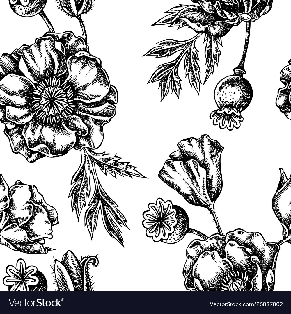 Seamless Pattern With Black And White Poppy Flower