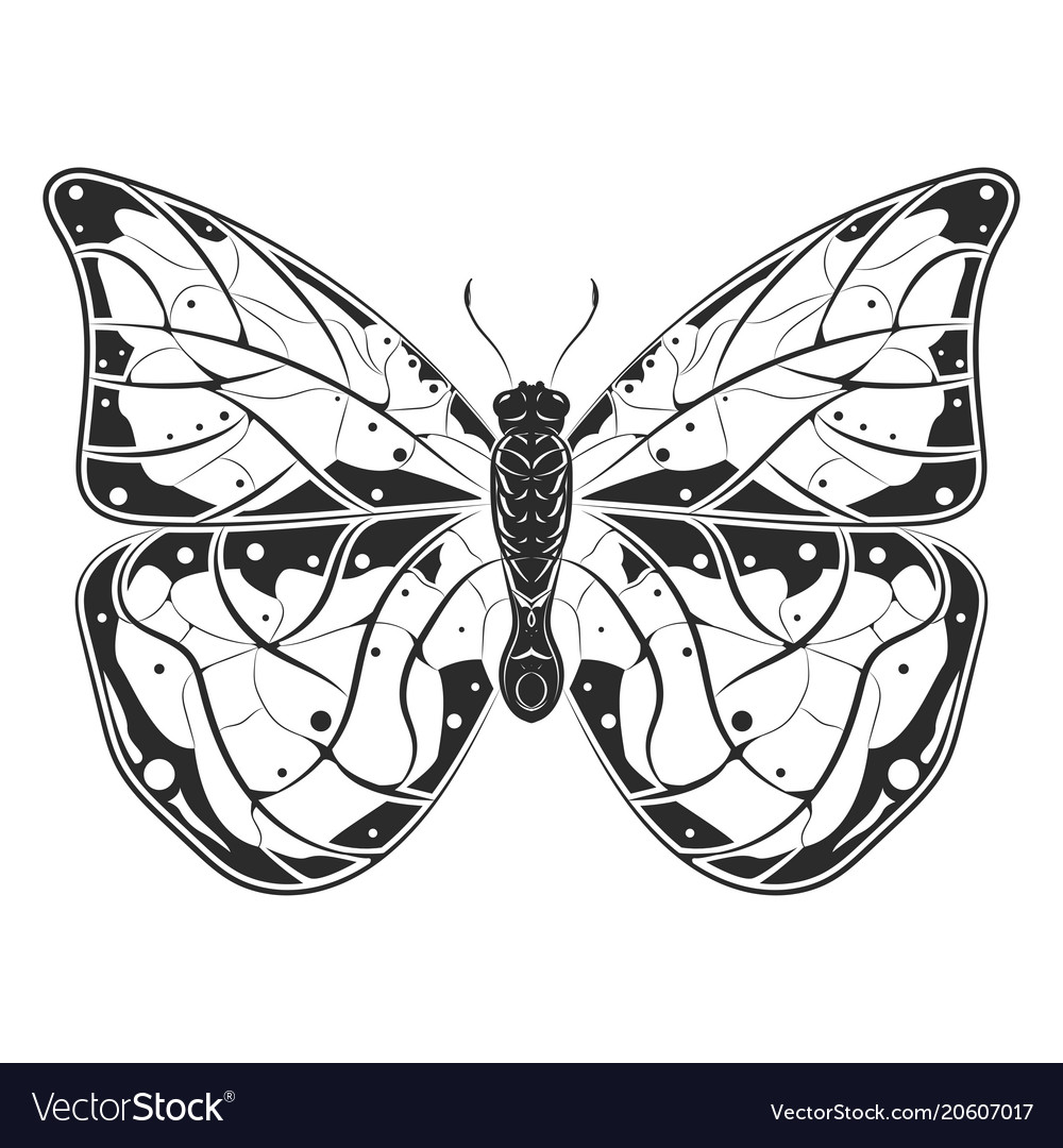 Butterfly black drawing vector image