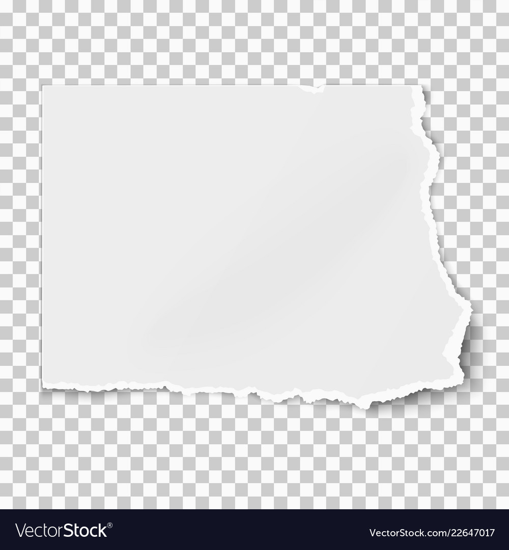 White Square Paper Tear Isolated On Transparent Vector Image