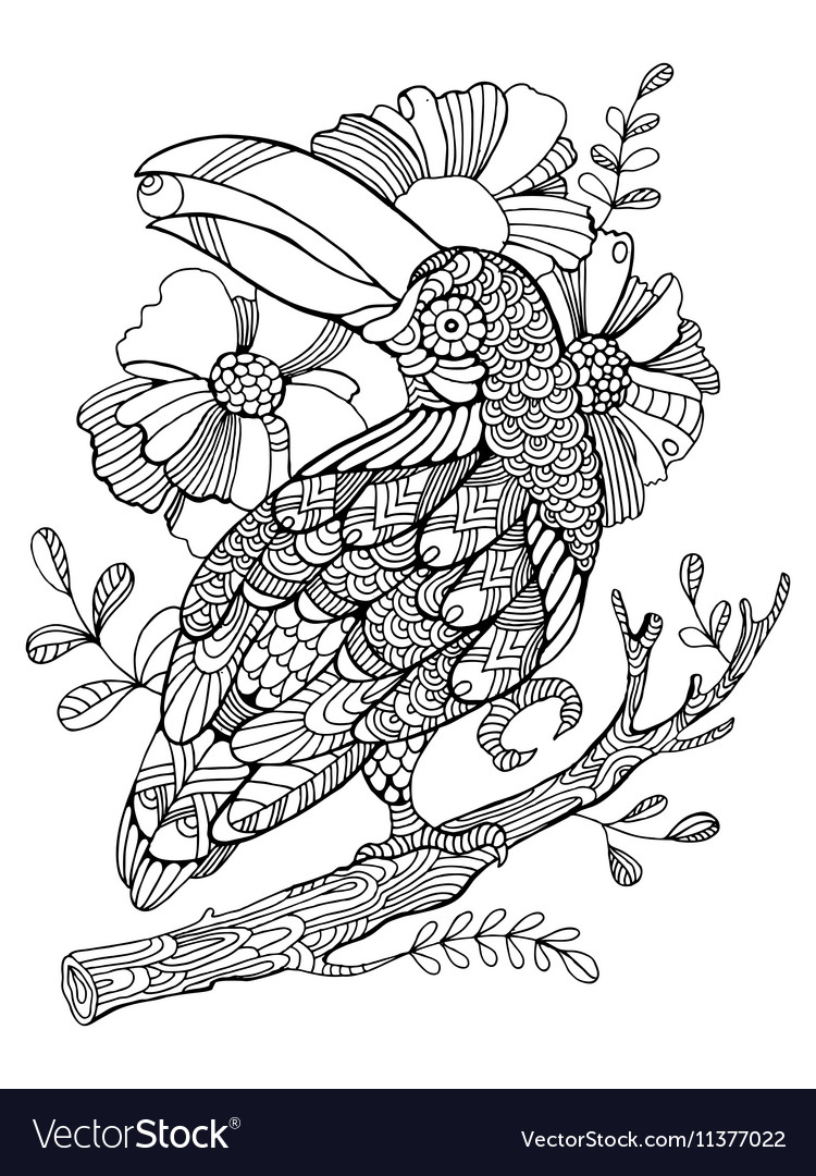 Stunningoo Animal Coloring Pages Toucan Bird Coloring4free Com_ ... | 1080x750