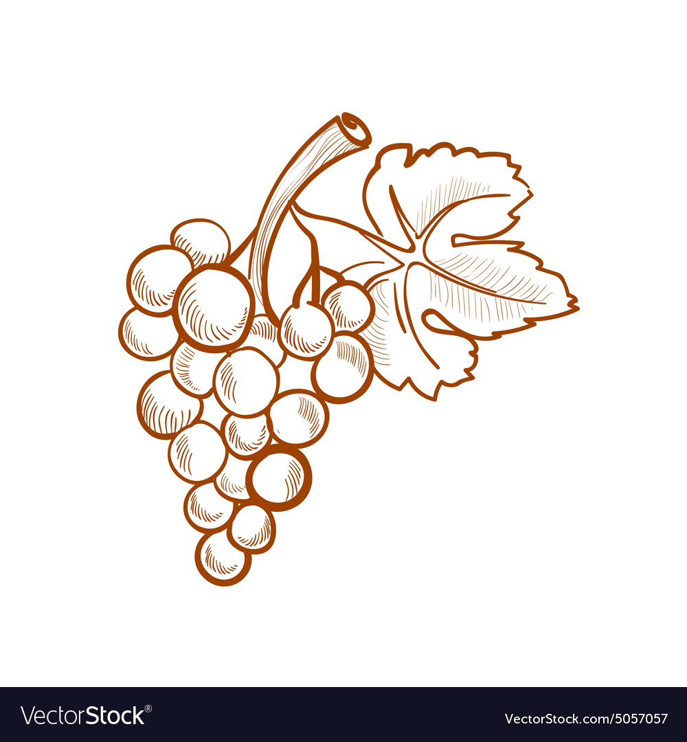 Hand drawn grapes doodle style