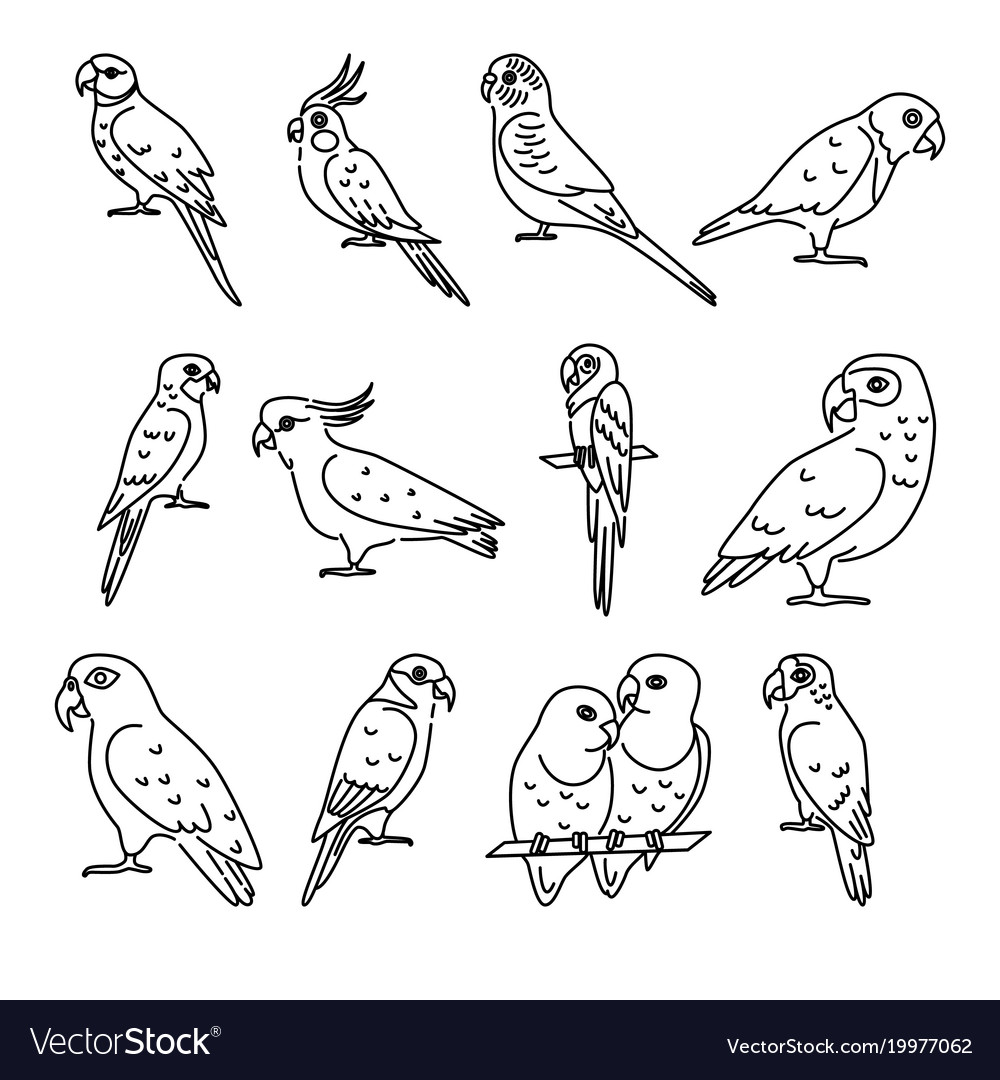 Set parrot icons in thin line style