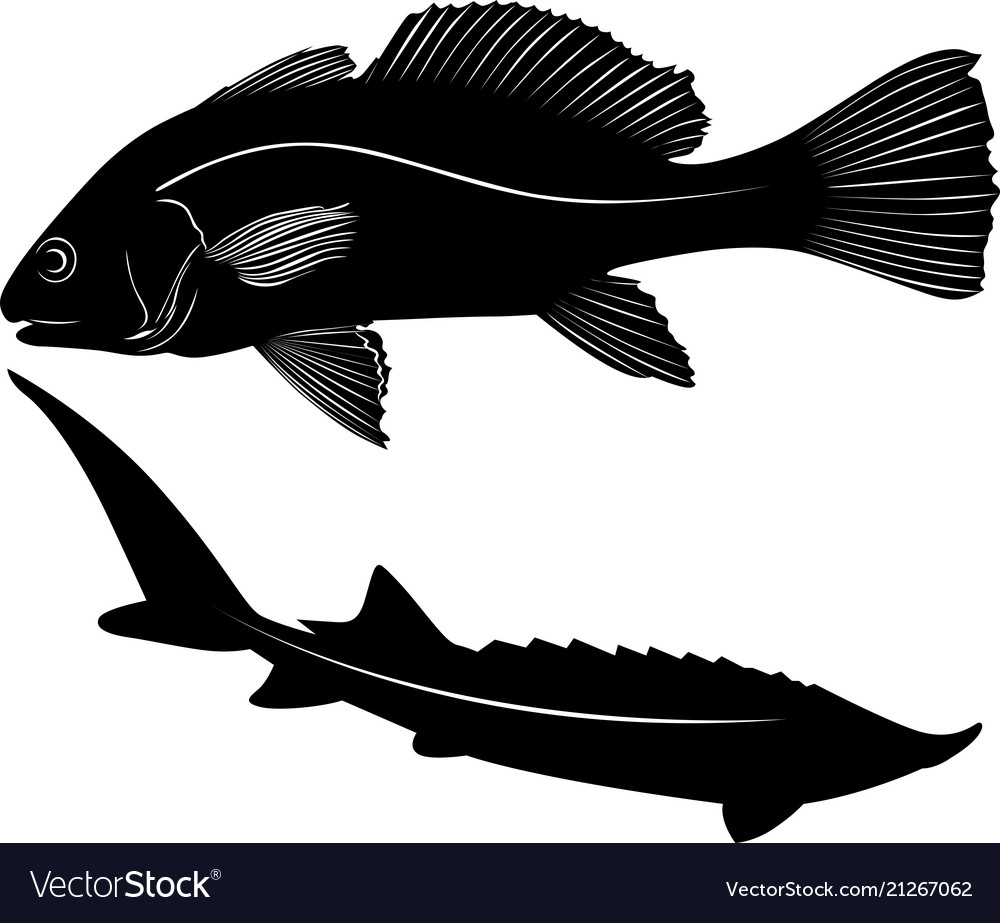 Silhouette of fish isolated on white background