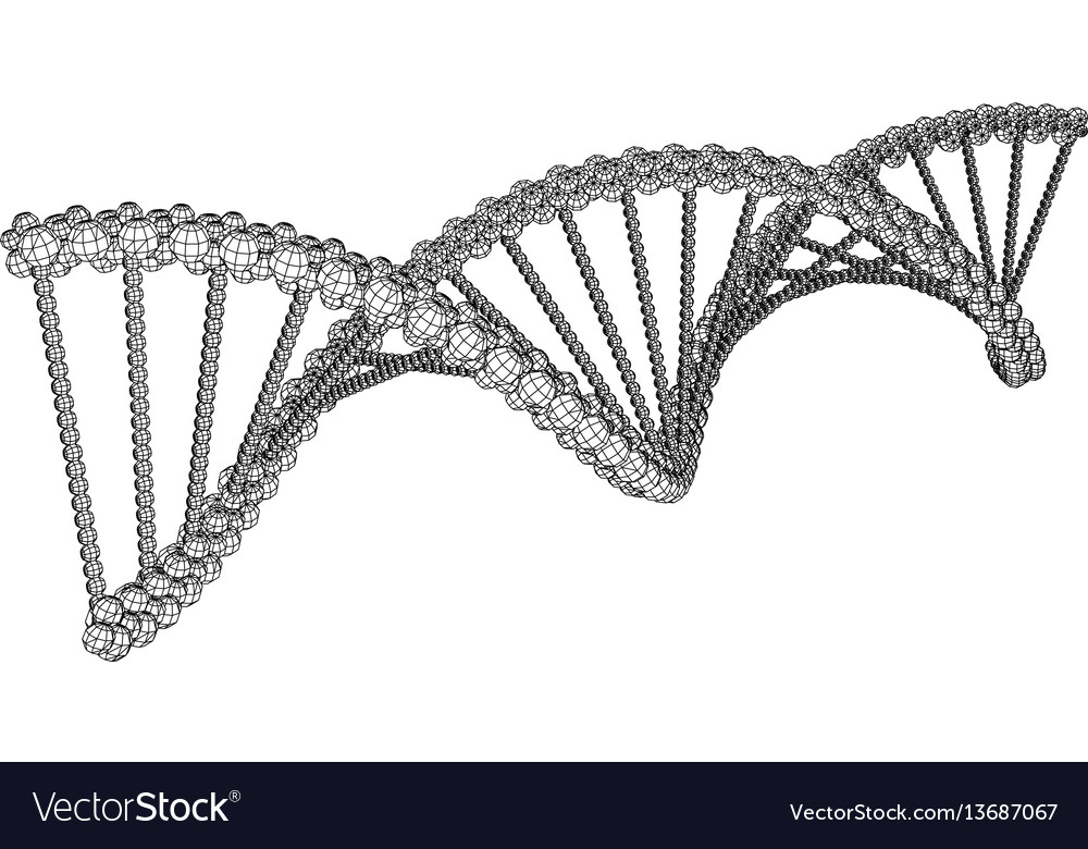Dna molecule picture vector image
