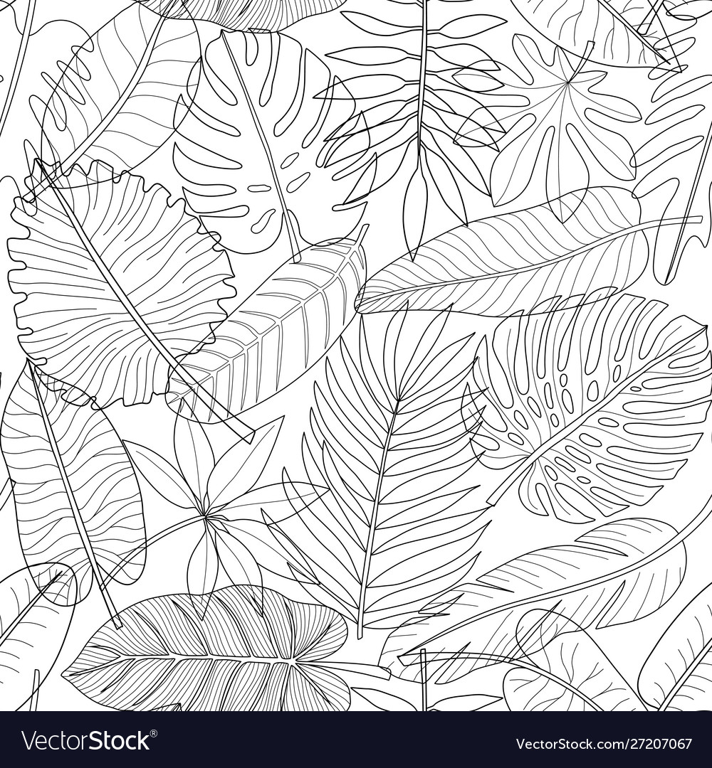 Leaves tropical plants black and white outline