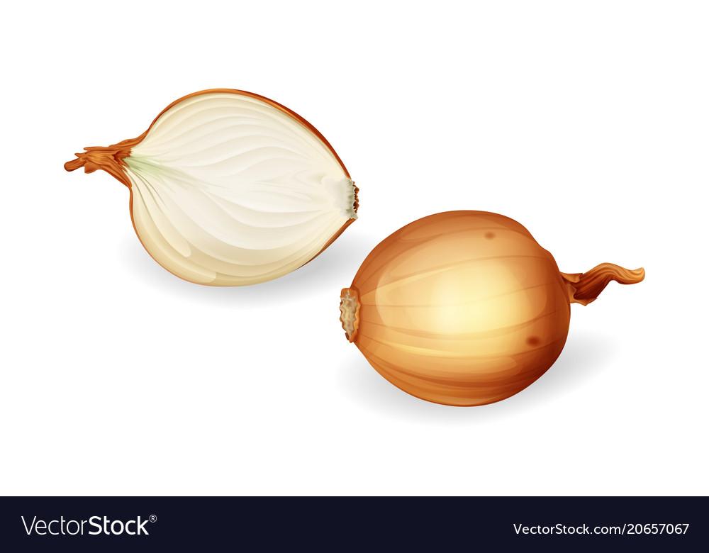 Yellow onion bulb with sliced half set