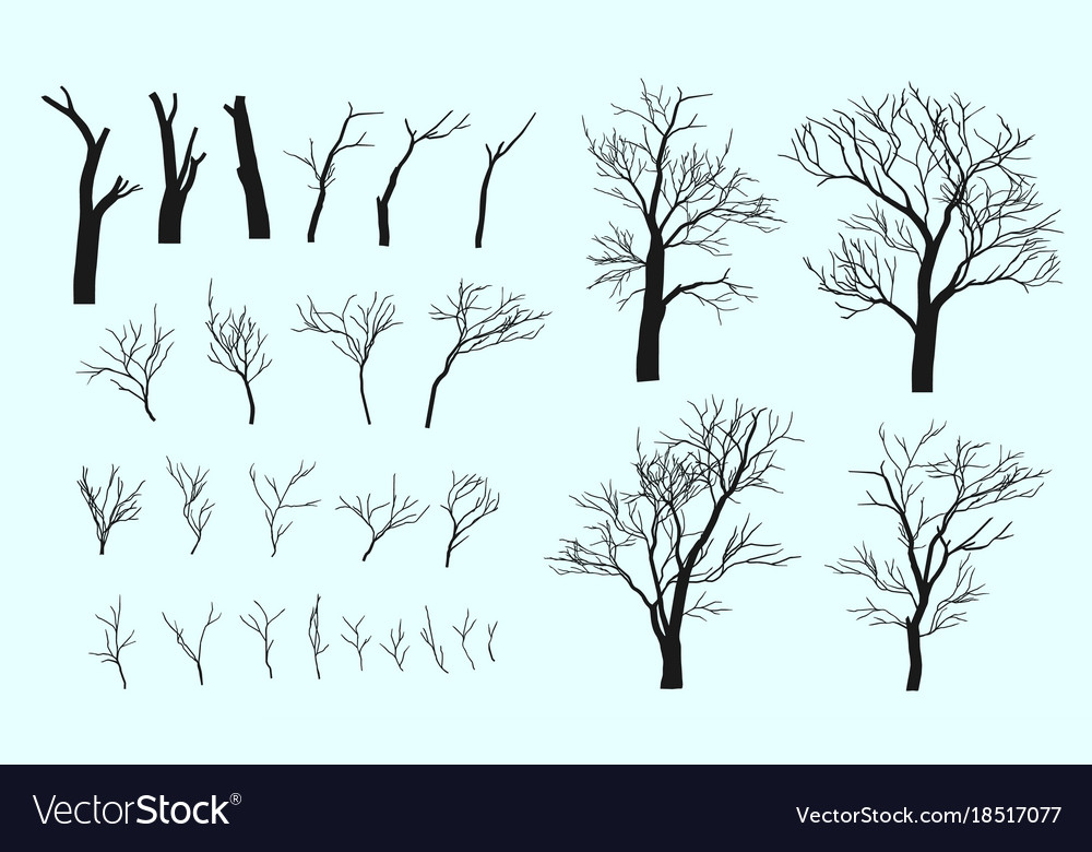 Set branches and tree
