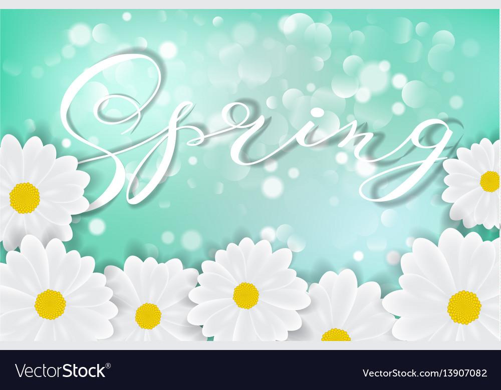 White daisy chamomile flowers on blue sunny sky