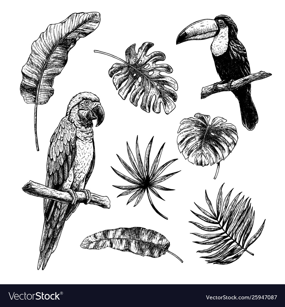 Drawing set tropical leaves with birds toucan