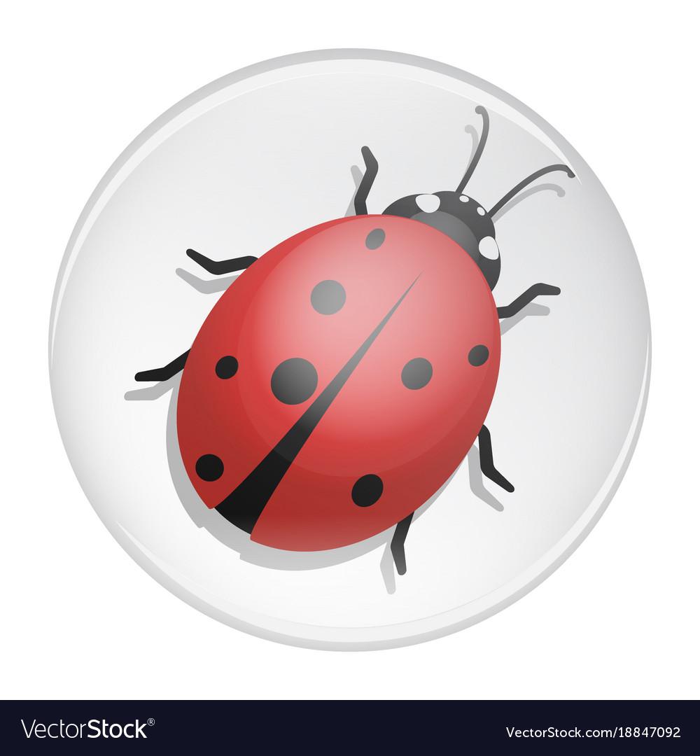 Ladybug on a white background design vector image