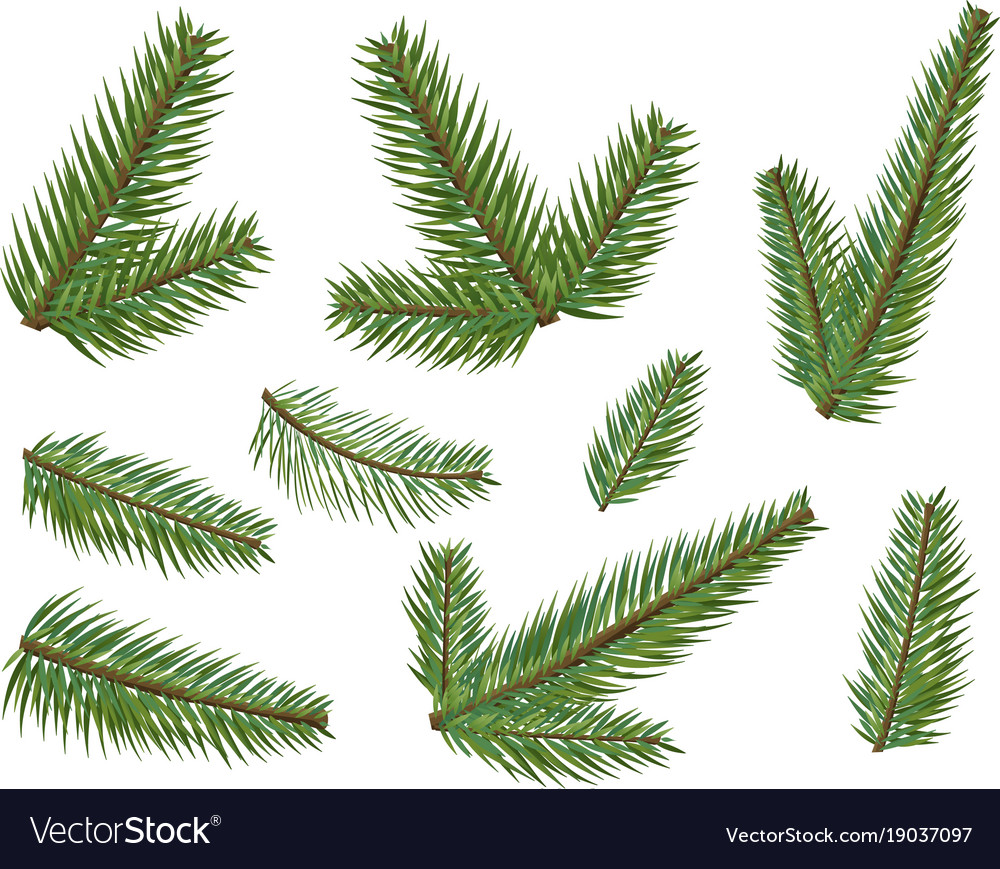 Different christmas tree branches set christmas