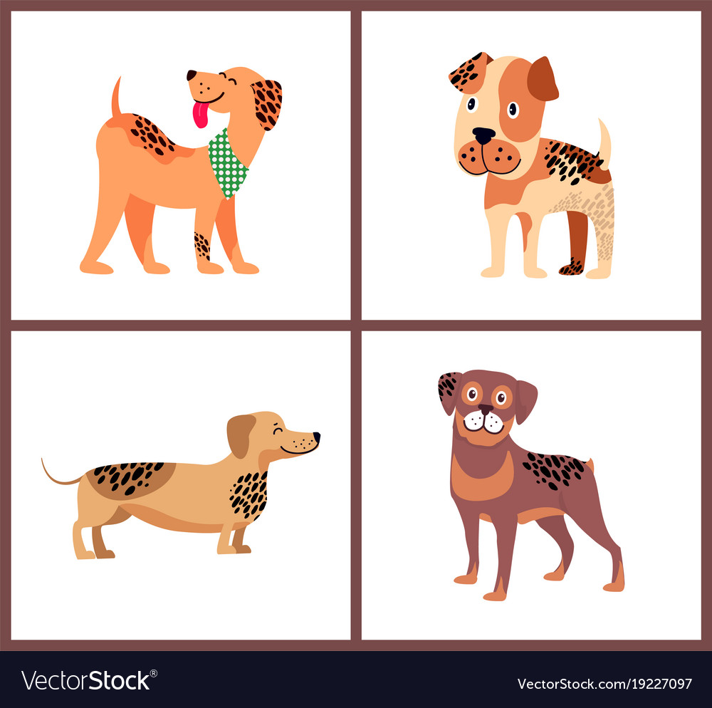 Pedigree dogs with unusual fur color and spots Vector Image