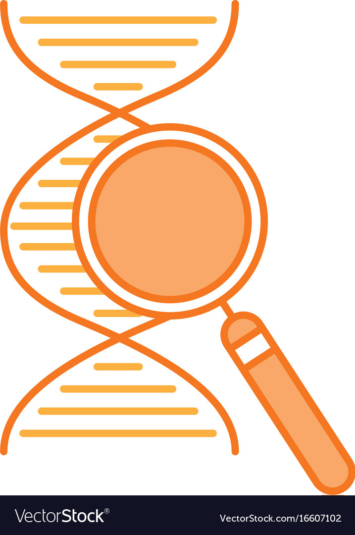 dna molecule with magnifying glass royalty free vector image