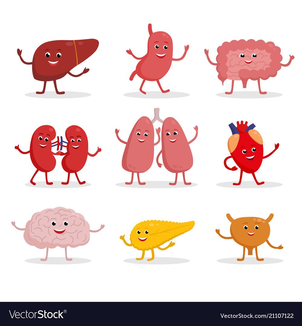 Human organs cartoon characters Royalty Free Vector Image