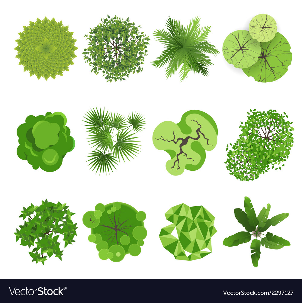 Trees - top view vector image