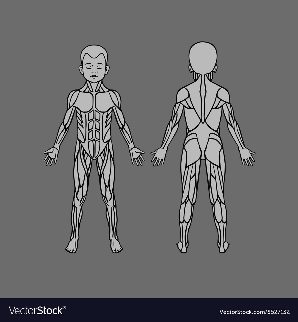 Pectoral & Muscle Vector Images (54)