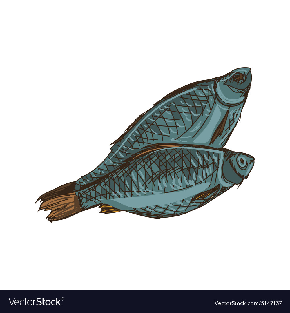 Doodle fish vector image