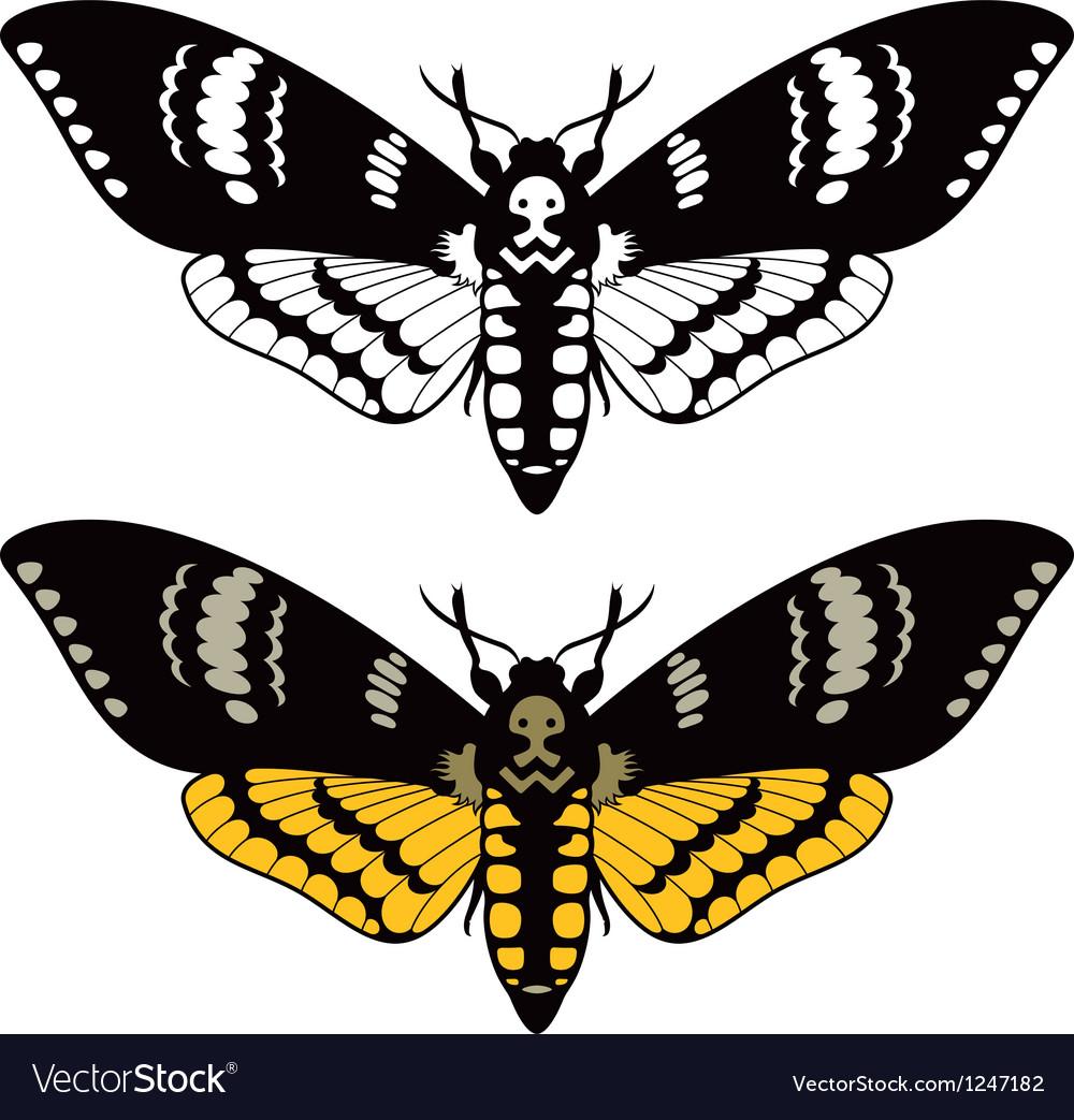 Deaths head hawk moth vector image