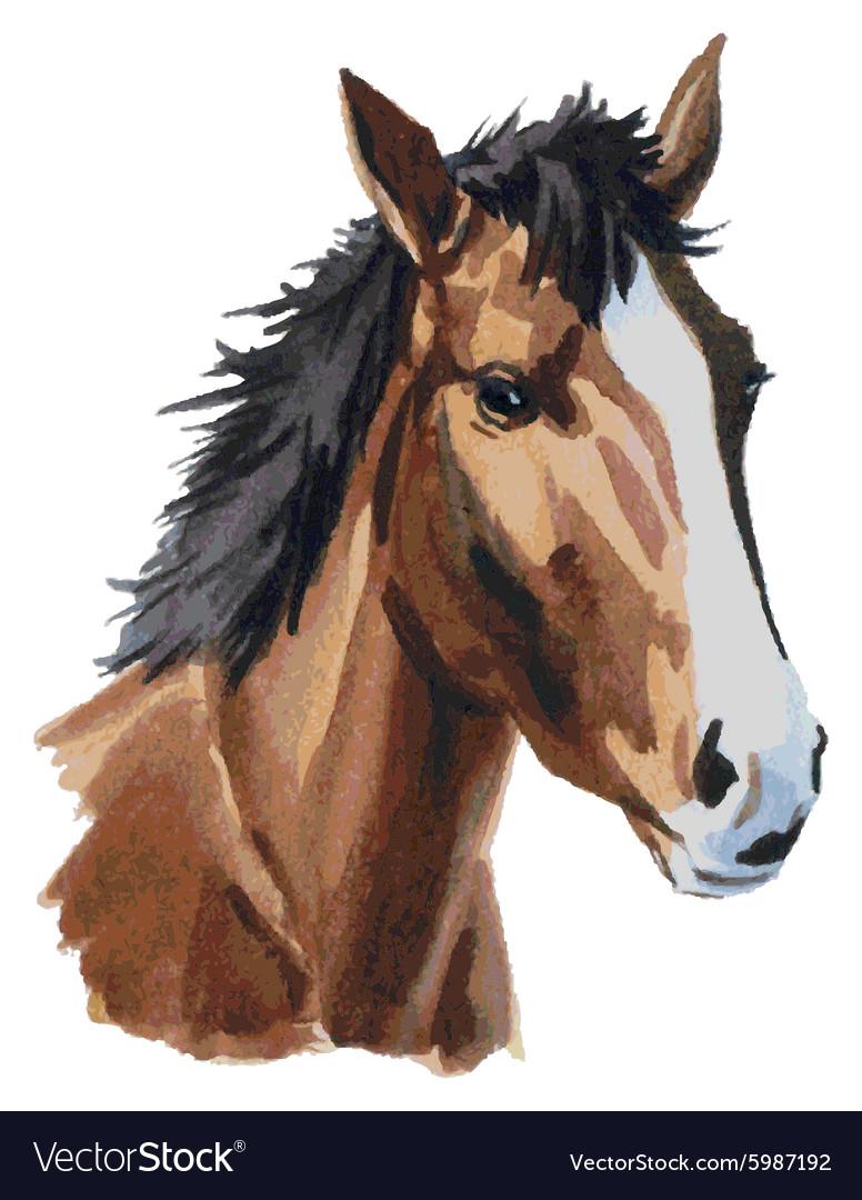 Horse Head Watercolor Royalty Free Vector Image