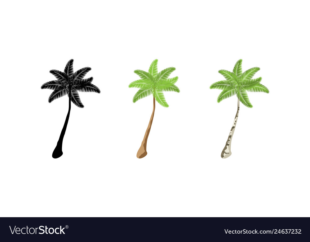 Palm trees collection palm trees three palm trees