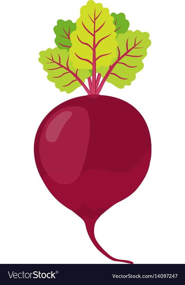 Beetroot cartoon style vegetarian fresh food