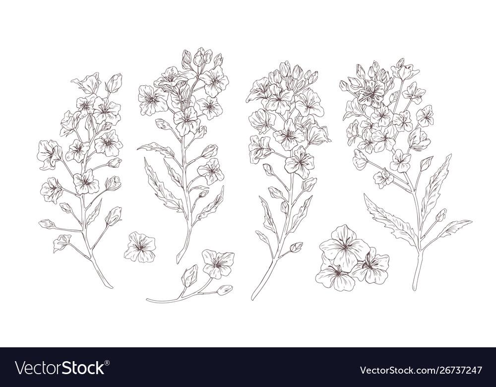 Set detailed botanical drawings blooming