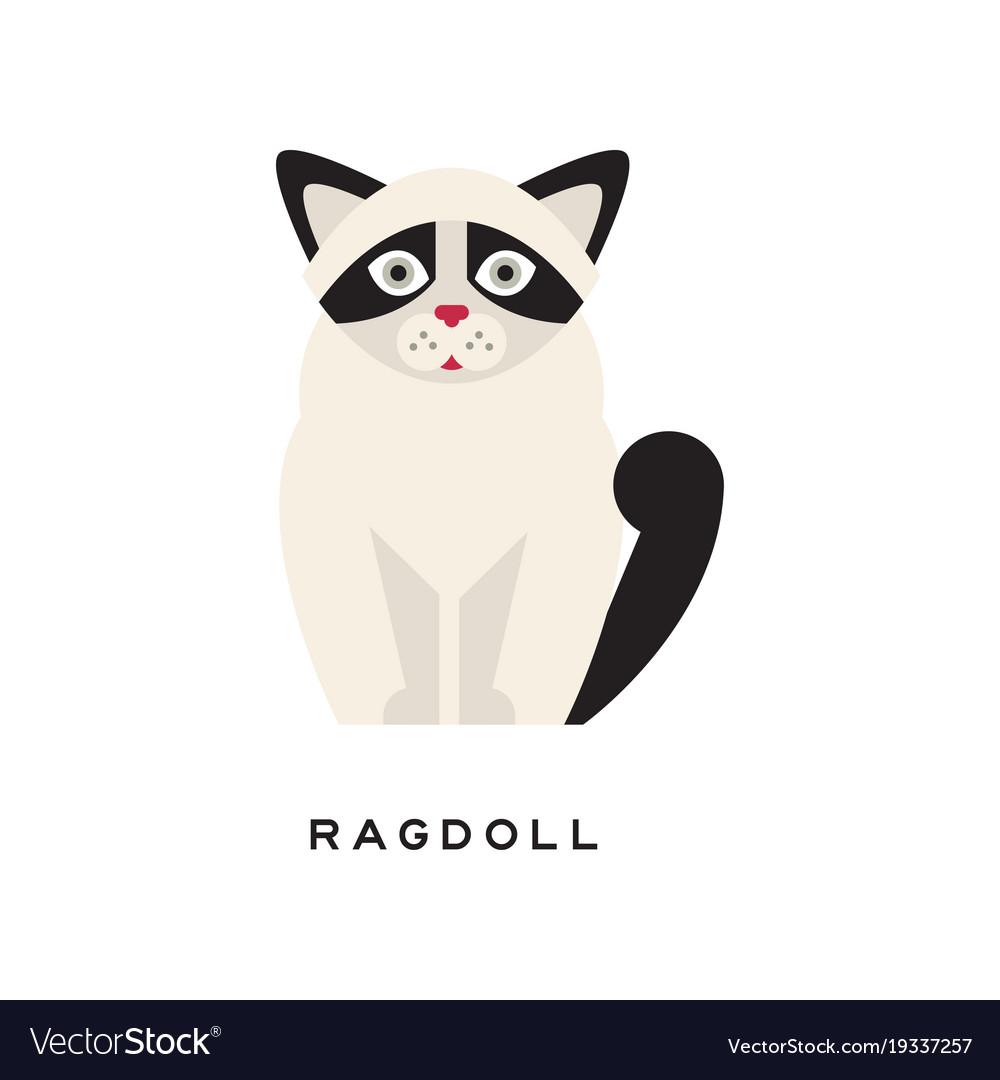 Cute portrait of ragdoll cat cartoon purebred pet