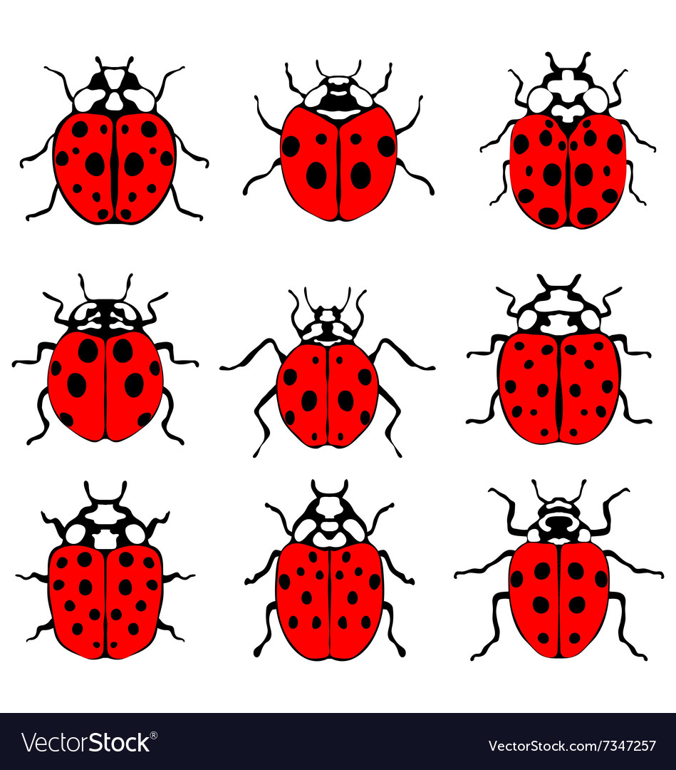 Red ladybugs