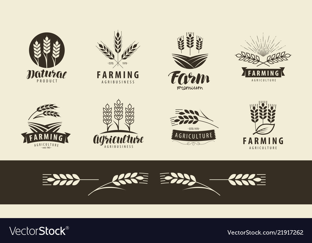 Agriculture wheat logo or label farm farming