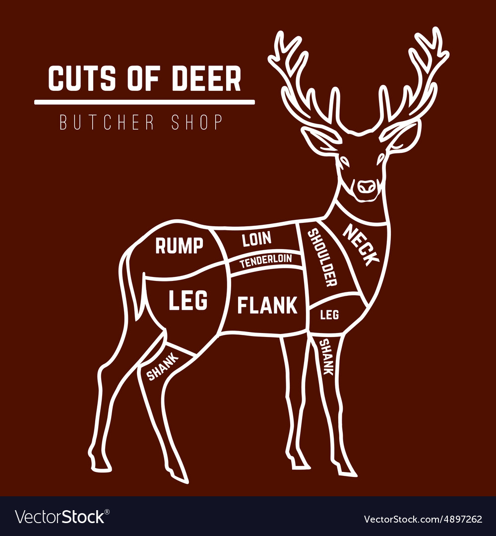 Admirable Deer Meat Cuts In Color Royalty Free Vector Image Wiring Digital Resources Hetepmognl