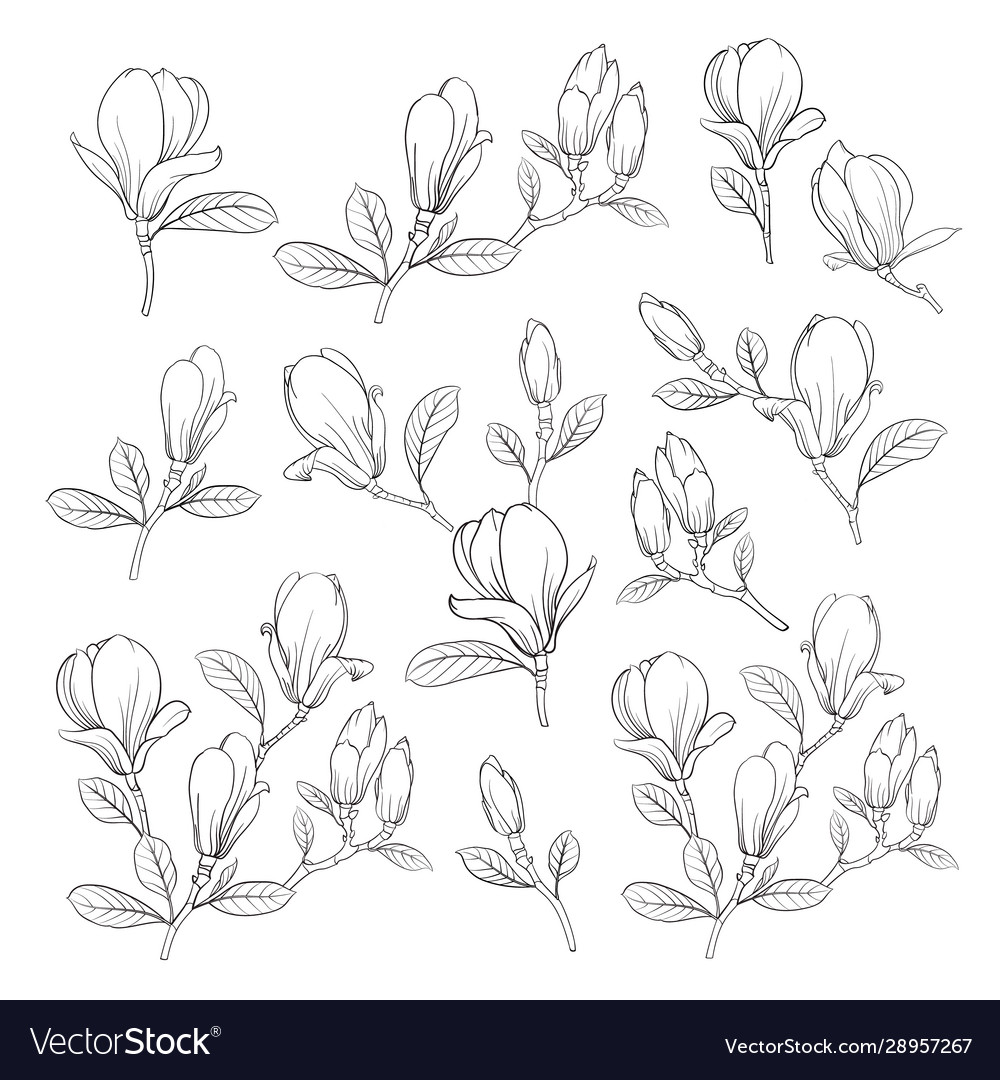 Set floral elements bundle linear sketch of