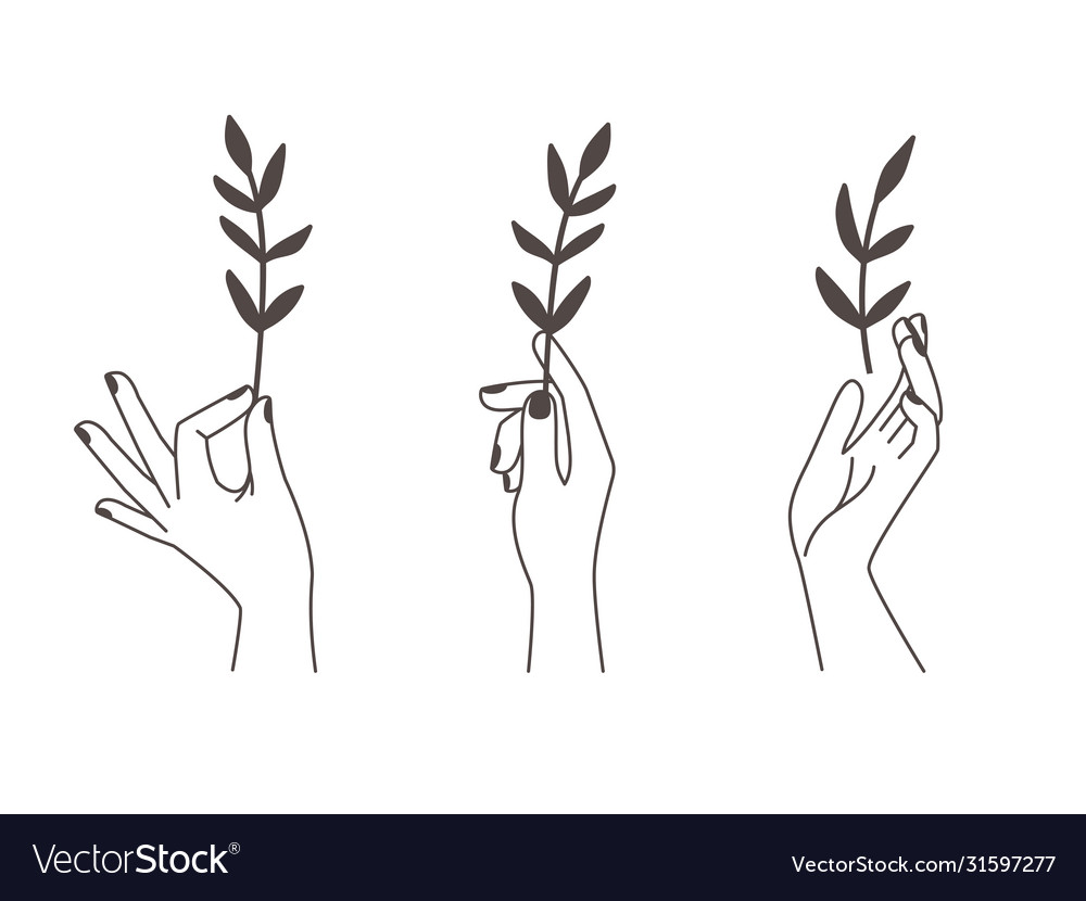 Female tattoo hands with branches