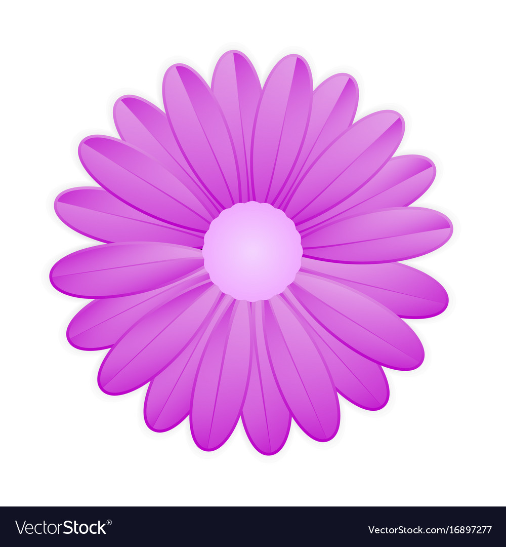 Purple flower on white background Royalty Free Vector Image