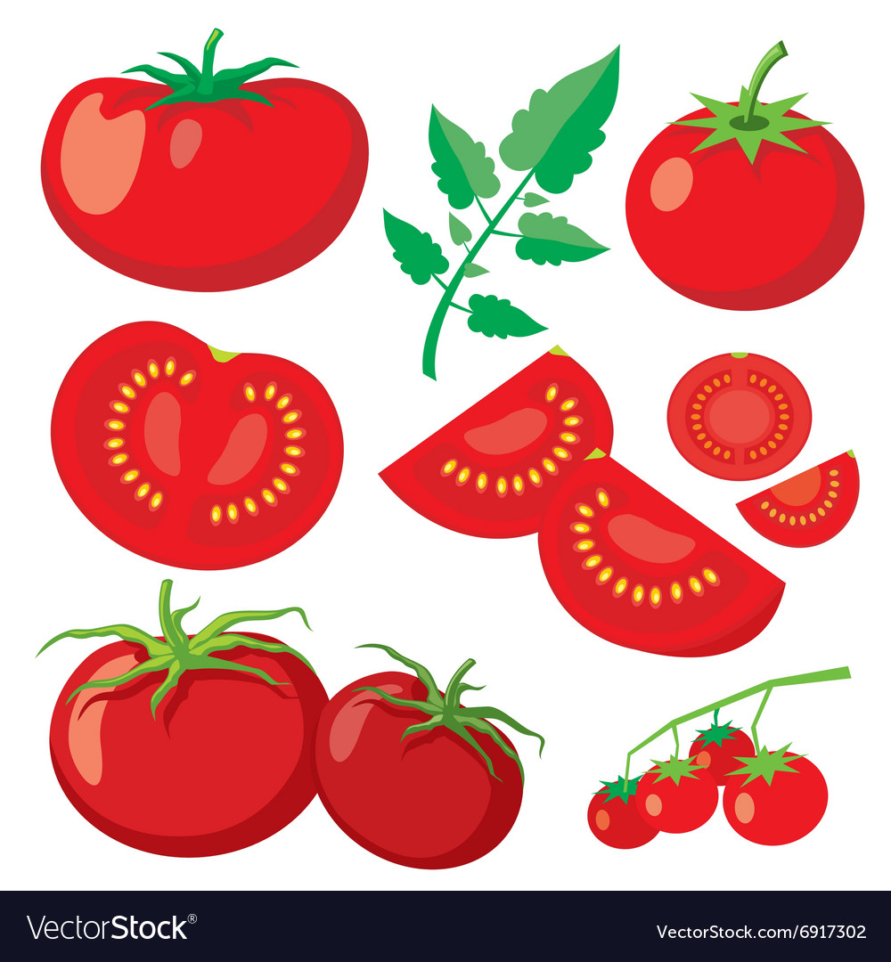 Fresh tomatoes in flat style vector image
