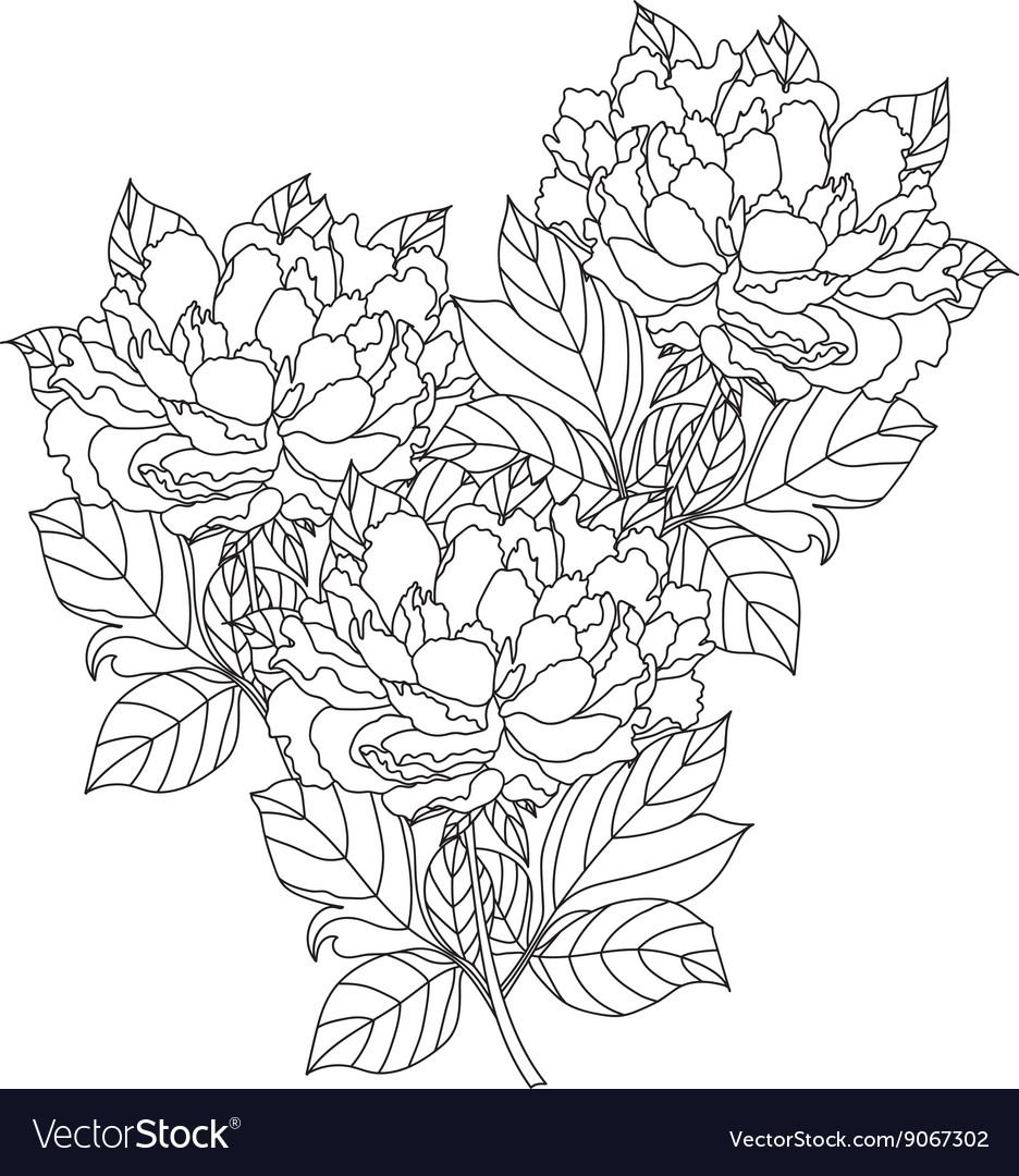 peony bouquet coloring book page for royalty free vector