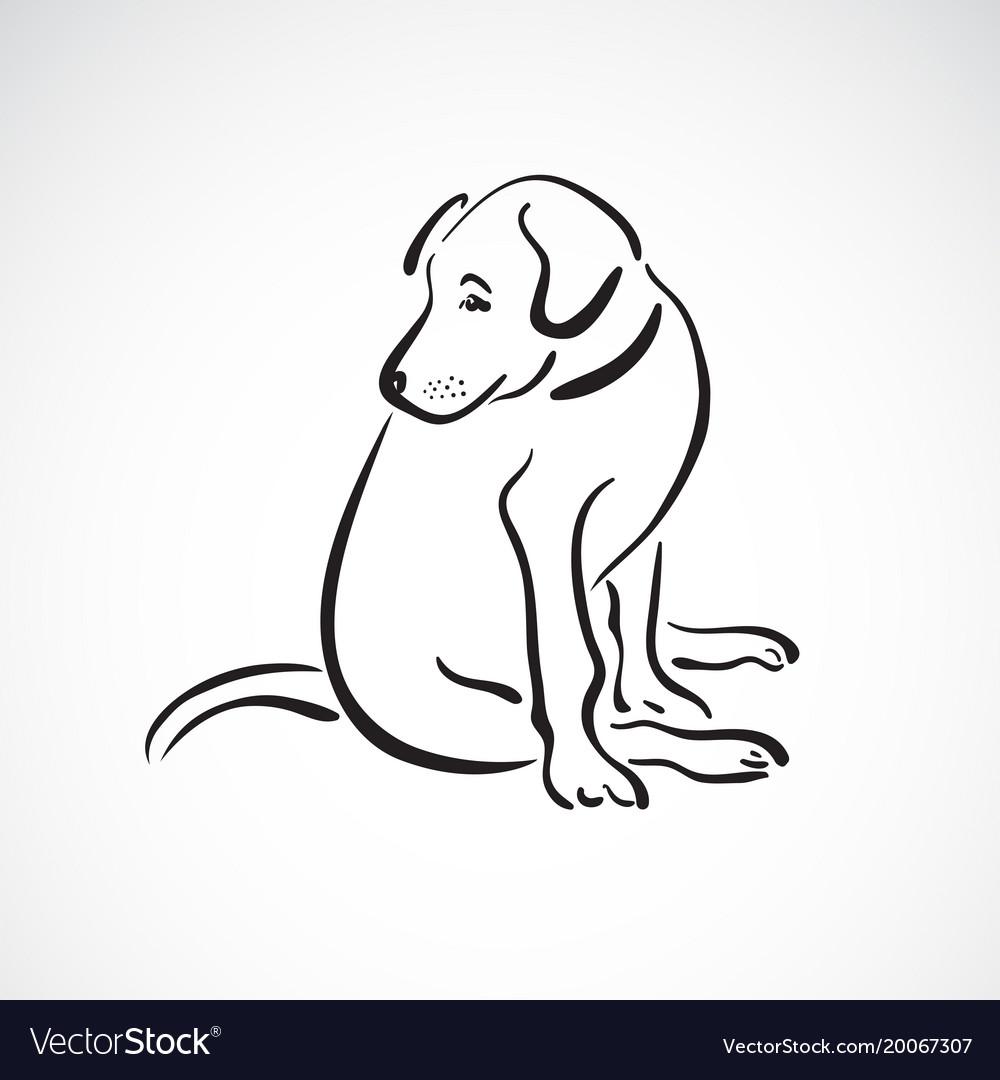 Sitting doglabrador retriever on white