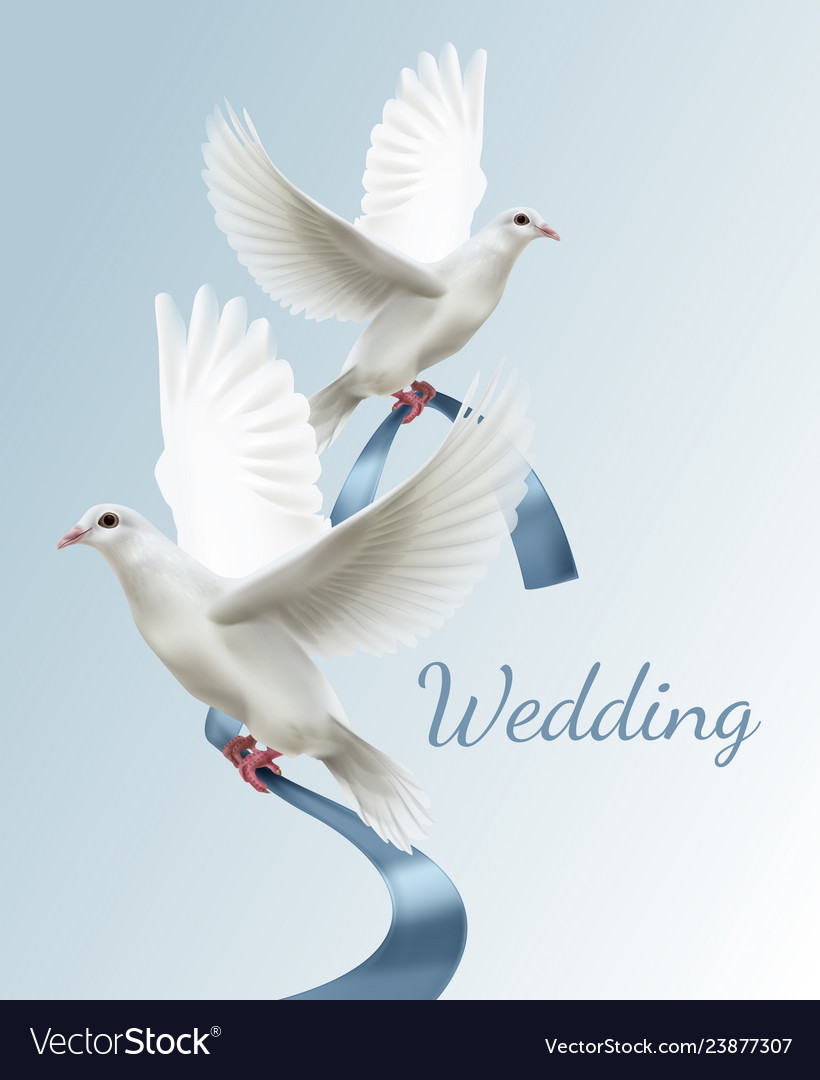 Two white doves with blue