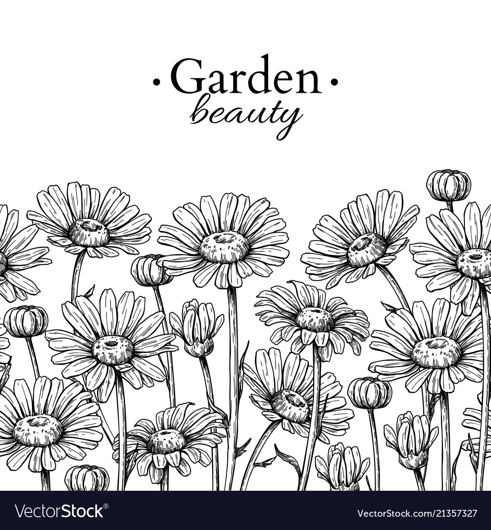 Daisy flower border drawing hand drawn