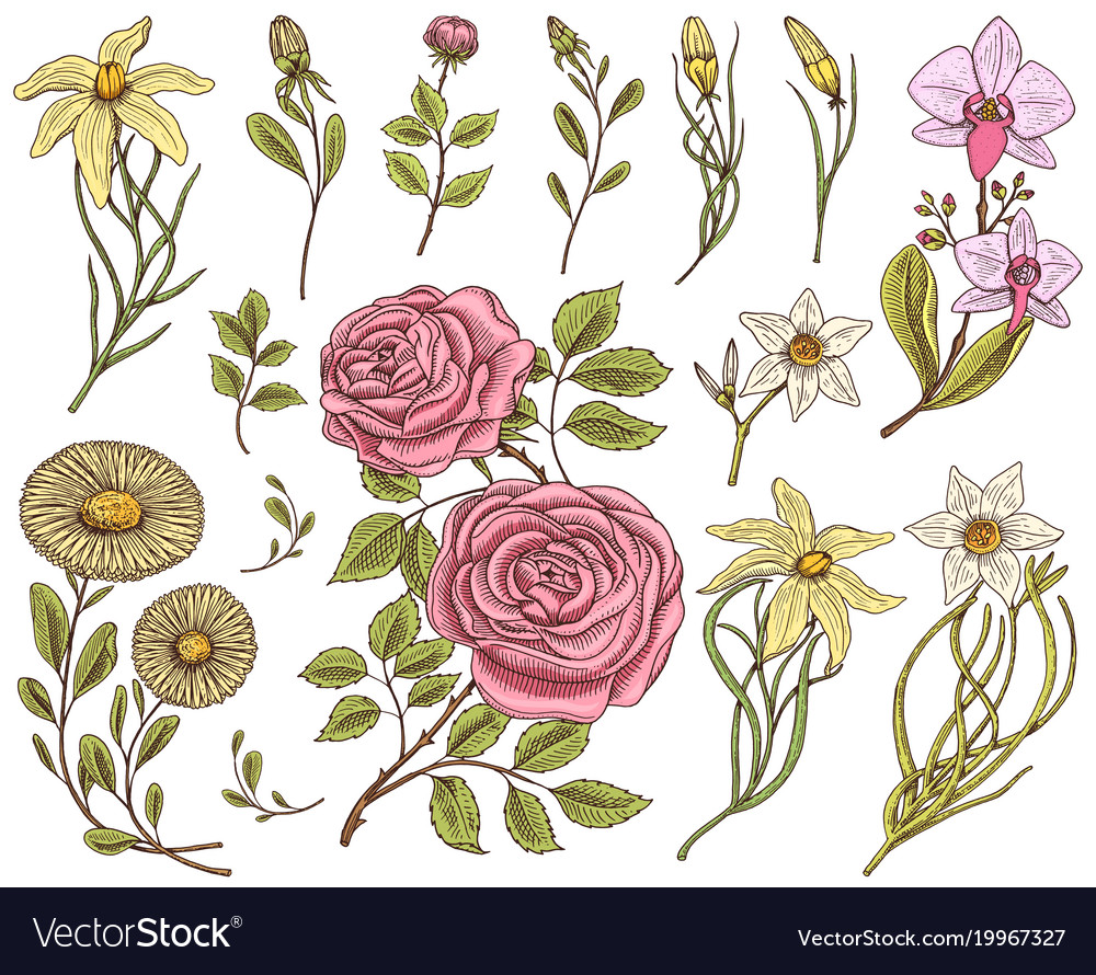 Flowers set roses with leaves and buds herb