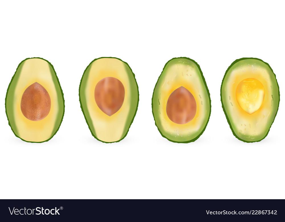 Set of realistic avocado evergreen fruit plant