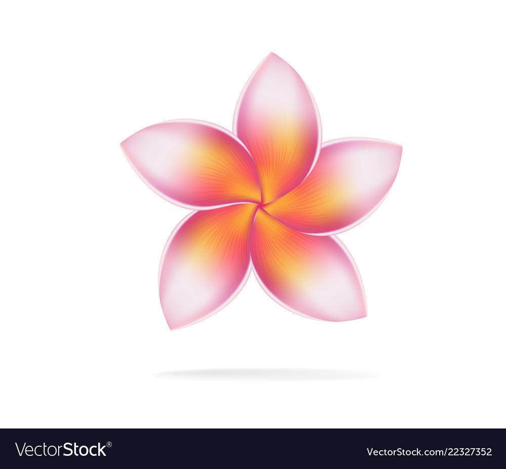 Hawaii Flower Frangipani Plumeria Rubra Royalty Free Vector