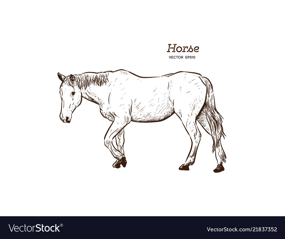 Horse Hand Draw Sketch Royalty Free Vector Image