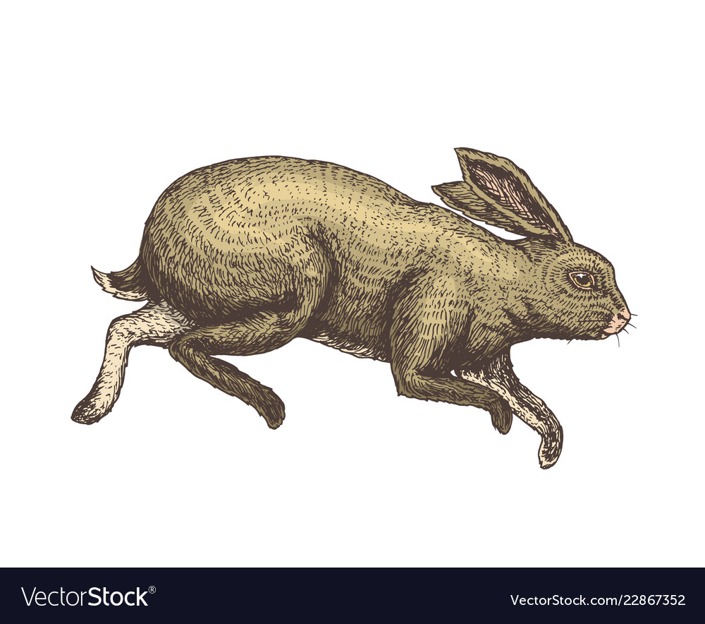 Soaring rabbit or bunny wild forest animal