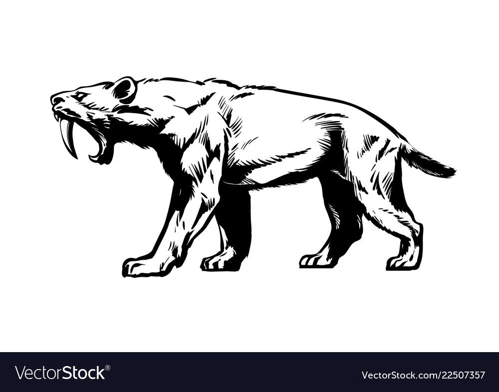 Saber toothed tiger smilodon saber-toothed cat