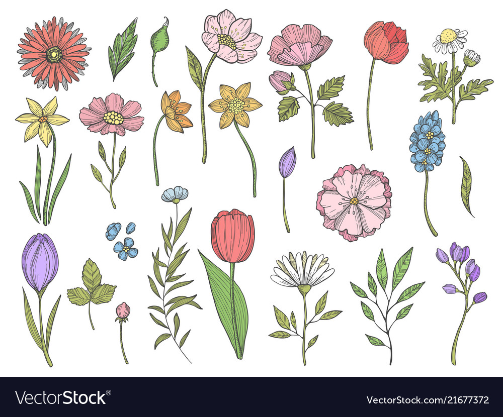 Colored plants of various