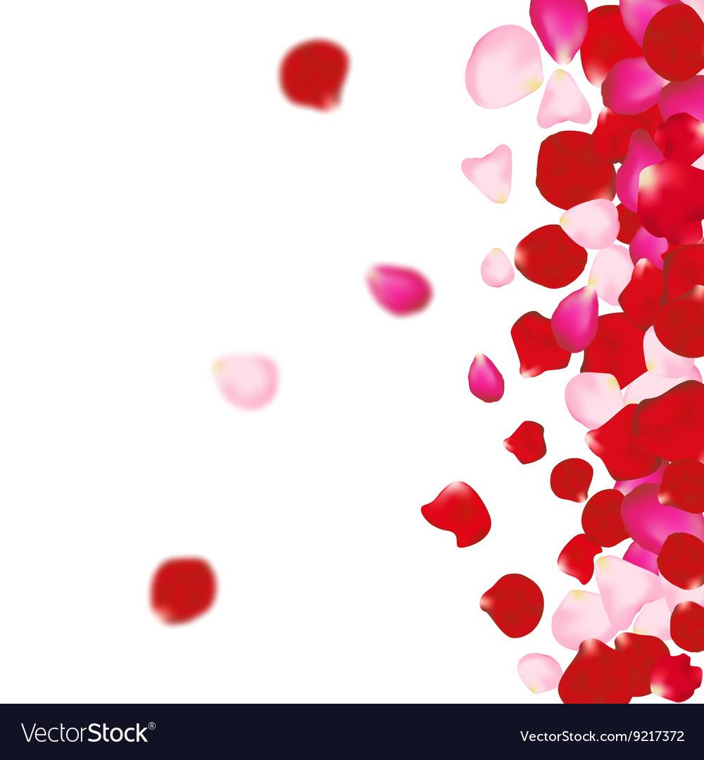 Rose petals background For presentations
