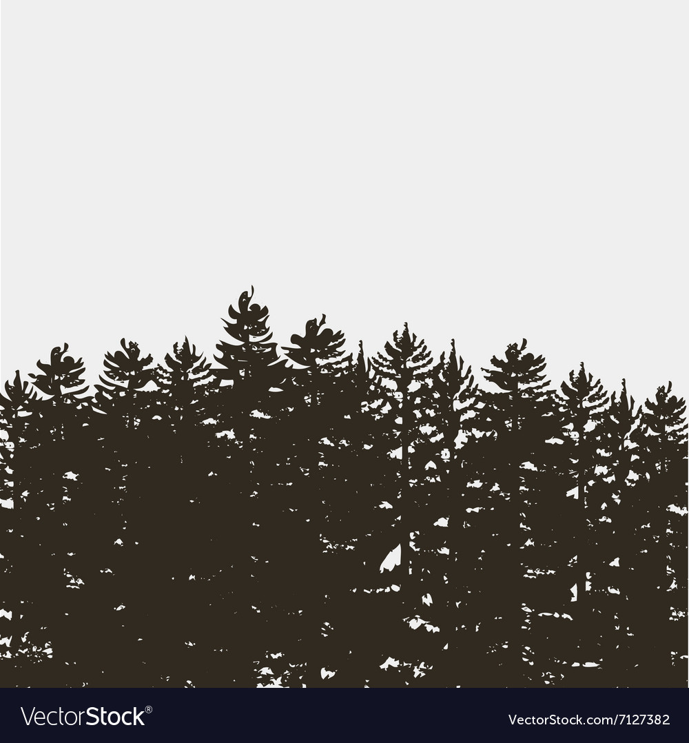Black pine tree forest isolated on white grey