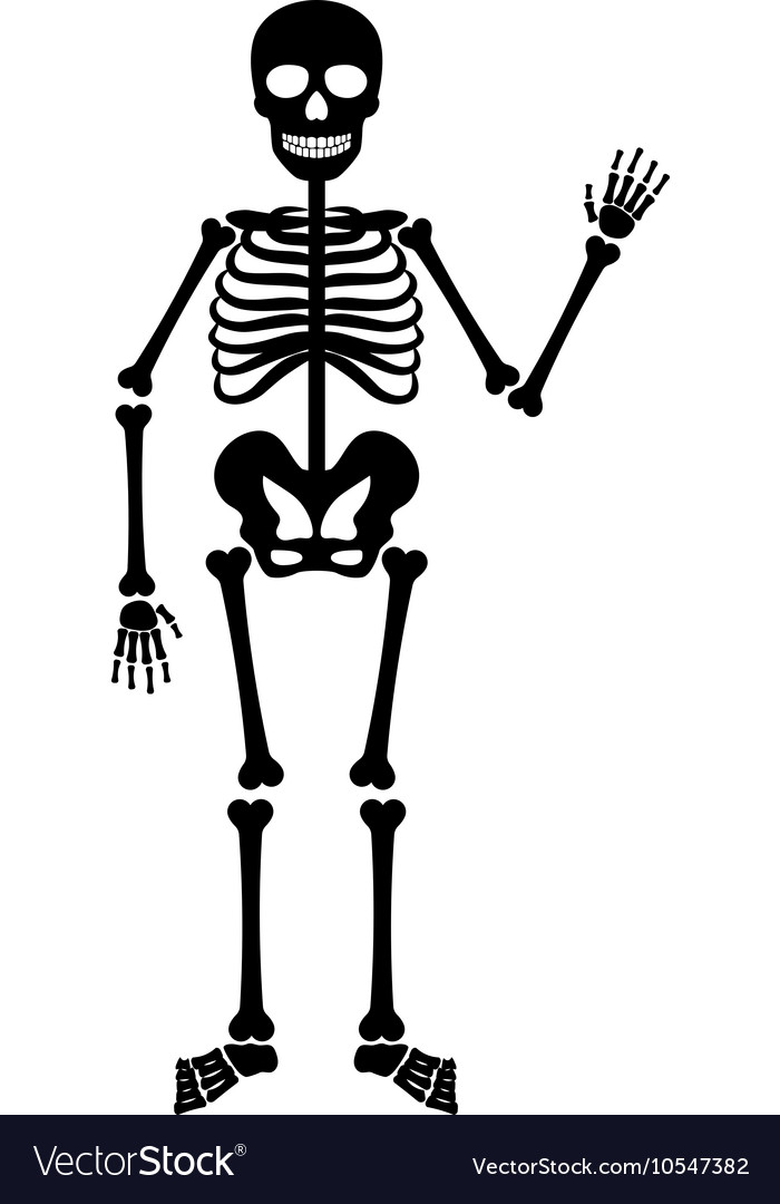halloween black skeleton royalty free vector image rh vectorstock com skeleton vector free skeleton vector illustration free