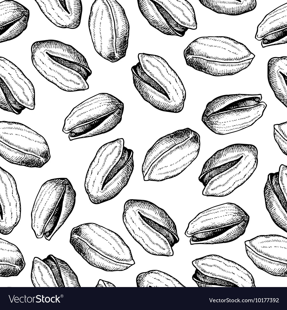 Hand drawn seamless Pistachios pattern